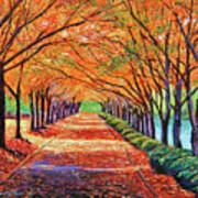 Autumn Tree Lane Poster