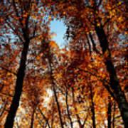 Autumn Tree Poster by Niki Mastromonaco