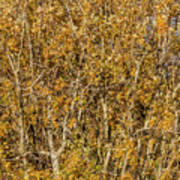 Autumn Tree Tangle Poster