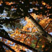 Autumn Trees 2015 Pa 01 Poster