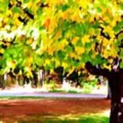 Autumn Trees 6 Poster