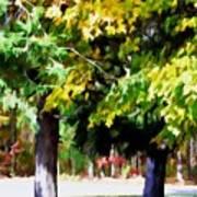 Autumn Trees 7 Poster