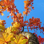 Autumn Trees Artwork Fall Leaves Blue Sky Baslee Troutman Poster