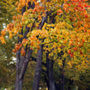 Autumn Trees In Park Poster