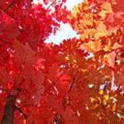Autumn Trees Red Orange Fall Trees Art Baslee Troutman Poster