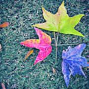Autumn Trio Poster