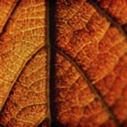 Autumn Veins Poster