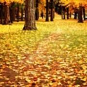 Autumn Walk In Spokane Poster