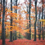 Autumn Whispers I Poster by Artecco Fine Art Photography