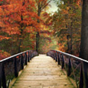 Autumn Woodland Crossing Poster