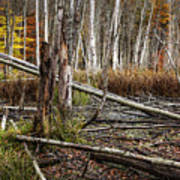 Autumn Woodland Marsh Scene Poster