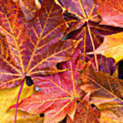 Autumnal Carpet Poster by Meirion Matthias