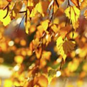Autumnal Curtain Poster