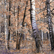 Autumnal Lightness Poster