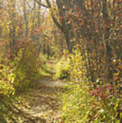 Autumns Path Poster