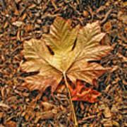Autumn's Textured Maple Leaf Poster