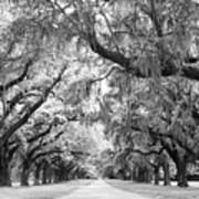 Avenue Of Oaks Charleston South Carolina Poster
