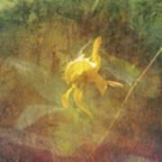 Awaken The Dreamer Poster