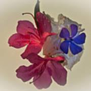 Azalea Bouquet Majic Poster
