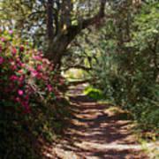 Azalea Path  Poster
