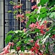 Azaleas At The Window   Poster
