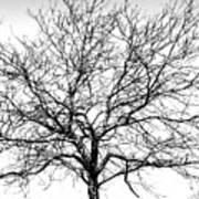 B/w Tree #1 Poster