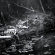 Baby Alligator Vs Mud Wasp Poster