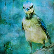 Baby Blue Jay Poster