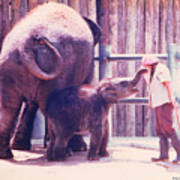 Baby Elephant At Zoo 1988 Poster