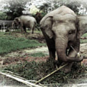baby Elephant Color Poster