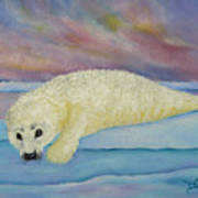 Baby Harp Seal Poster