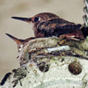 Baby Hummers Poster