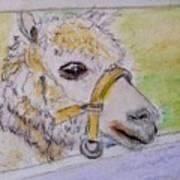Baby Llama Poster