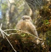 Baby Owl Sleeping Poster