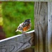 Baby Robin  Poster