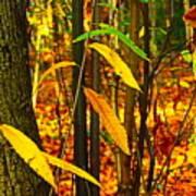 Baby Tree Foliage Poster