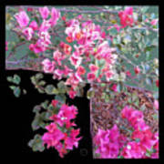 Back Door Bougainvillea Poster by Eikoni Images