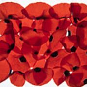 Back Lit Flower Petals  Poster