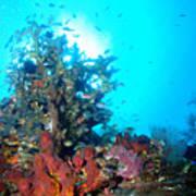 Backlit Coral Poster