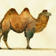Bactrian Camel Poster