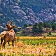 Badlands Elk  Poster