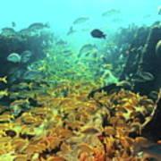 Bahamas Shipwreck Fish Poster