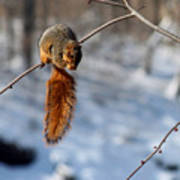 Balancing Squirrel Poster