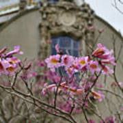 Balboa Park Building And Spring Flowers - San Diego Poster