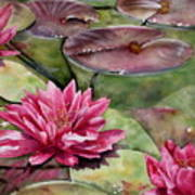 Balboa Water Lilies Poster