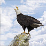 Bald Eagle Art - Speak Your Voice Poster