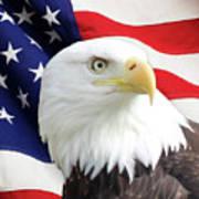 Bald Eagle Close Up Poster