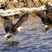 Bald Eagle Fishing Pano Poster
