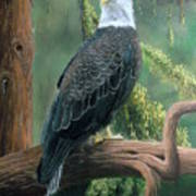 Bald Eagle In Pastel Poster