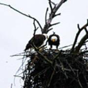 Bald Eagles Along The Delaware River Poster
